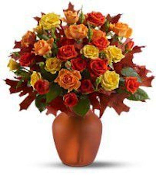 Amber Roses