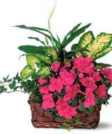 Azalea Garden Basket