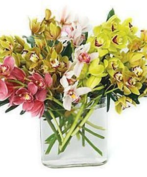 Mixed Mini Cymbidium Orchids