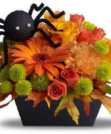 Perfect Halloween Gift!