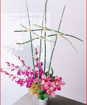Artistry of Orchids